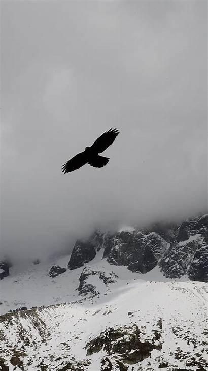 Iphone Eagle Wallpapers Mountains Winter Clouds Flight