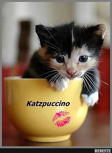 katzpuccino lustige bilder sprueche witze echt lustig