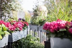 Blumen Für Den Balkon : welche balkonpflanzen f r sonnigen balkon w hlen ~ Lizthompson.info Haus und Dekorationen