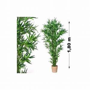 Plantes Pas Cher Paris : plante interieur bambou 20170831235029 ~ Dailycaller-alerts.com Idées de Décoration