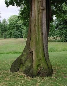 Comment Creuser Un Tronc D Arbre : un tronc d 39 arbre couvert de mousse dans kensington gardens londres ~ Melissatoandfro.com Idées de Décoration