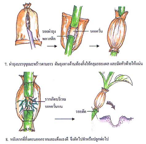 ประวัติส่วนตัวของ กนกพรรณ ชูเชื้อ: การขยายพันธุ์พืช