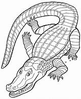 Crocodile Coloring Pages Animal Animals Leopard sketch template