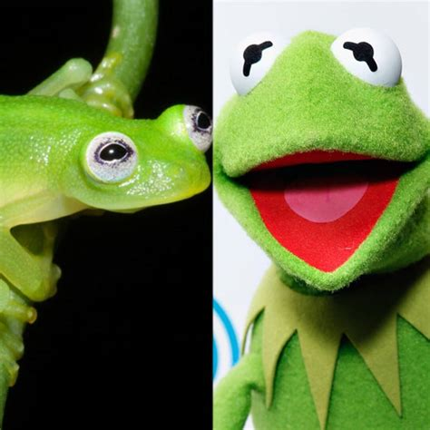 Kermit The Frog Is Real E Online