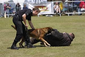 Police dog - Wikipedia