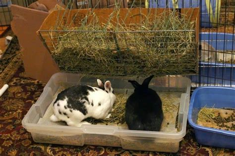 best litter box setup all i can say is white rabbit yellow after putting this