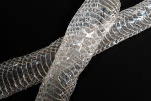 why do snakes shed their skin wonderopolis