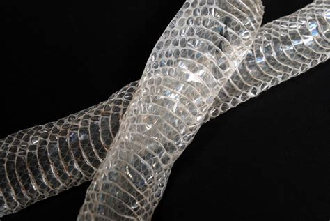 shedded snake skin preservation why do snakes shed their skin wonderopolis