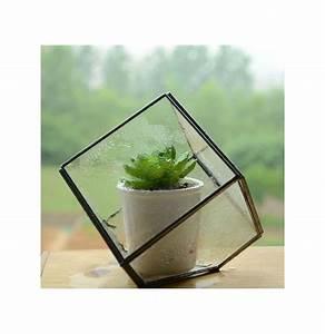 Diy Micro Paesaggio Cubo Di Vetro Serra Piante Grasse Vaso