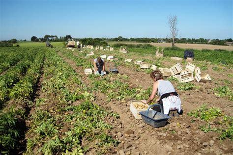 la tour 224 pommes de terre de carr 233 potager mobilier de