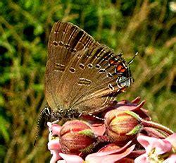 butterflies  pennsylvania northeast pennsylvania