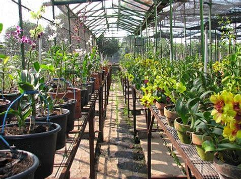pengertian budidaya tanaman hias belajar berkebun