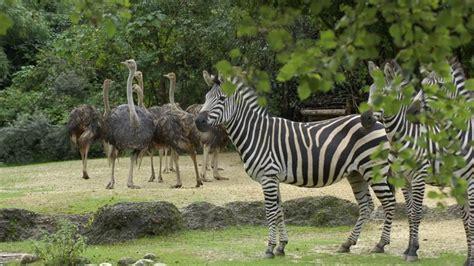 Zoological Garden Manipur Zoological Garden Imphal Manipur India Youtube