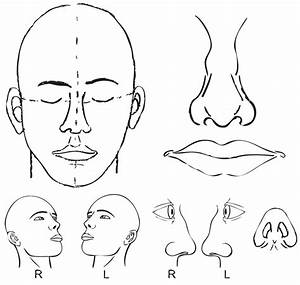 Face Surface Anatomy