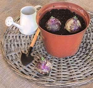 Bulbes D été : planter des bulbes d t nouvelles famiflora le plus ~ Melissatoandfro.com Idées de Décoration