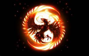 Phoenix Full HD Wallpaper and Background Image   2560x1600 ...