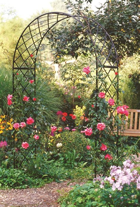 Climbing Rose Supports