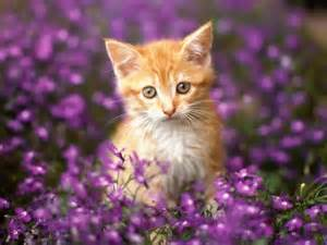 are roses toxic to cats poisonous flowers for cats flowers magazine
