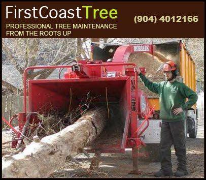 tree pruning jacksonville fl tree service jacksonville