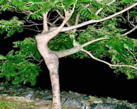 Super Facts Most Amazingfunny And Creative Trees
