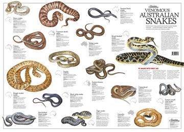 australian snakes poster magazine subscriptions magshop