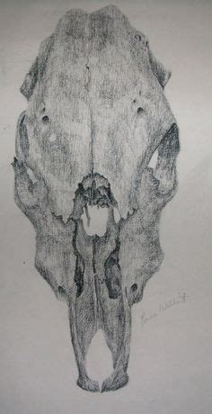 Animal Skull Biro Drawing Structure Project Kat