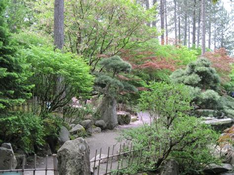 japanese garden tranquility picture of manito park