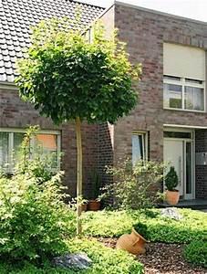 Schöne Bäume Für Garten : baum einpflanzen 8 ~ Eleganceandgraceweddings.com Haus und Dekorationen