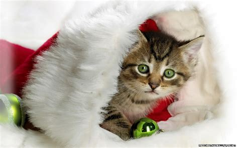 Cute Christmas Wallpapers  Amazing Wallpapers