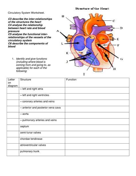 circulatory system diagram worksheet circulatory system