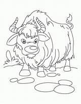 Yak Coloring Sheet Ox Kolorowanki Clipart Ludinet Jak Vbs Sheets Kolorowanka Animaux Noel Druku Growling Everest Clip Animal Drukuj Enyonge sketch template