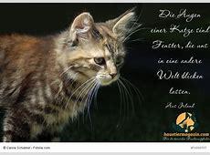 Bildergalerie süßer Tierbilder bei uns im Haustiermagazin
