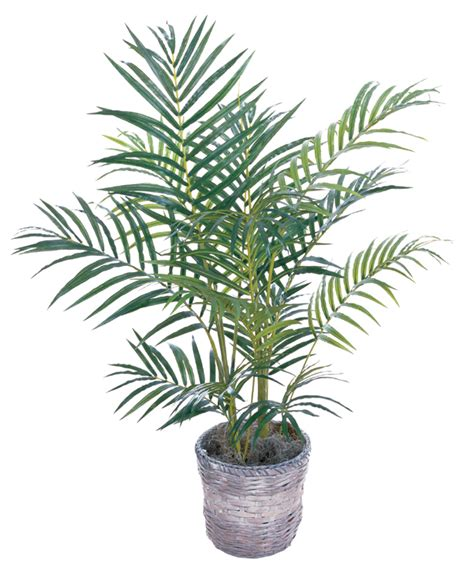 areca palm 15 best air purifying plants our service company