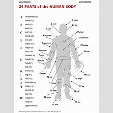 Body, English, Learning English, Vocabulary, Esl, English Phrases, Httpwwwallthingstopics
