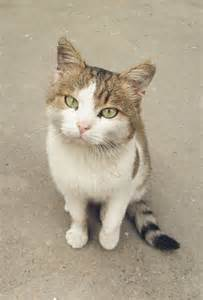 images of cats file confused cat jpg wikimedia commons
