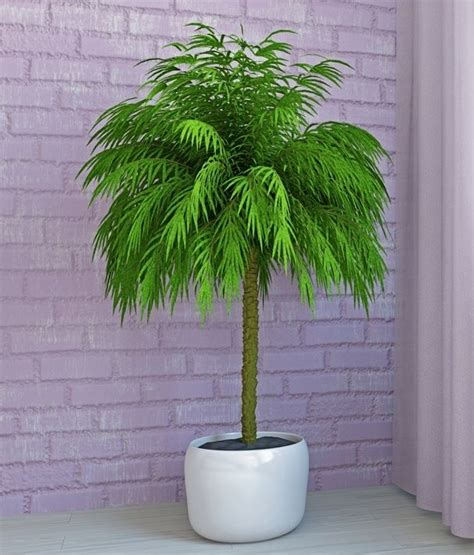 Low Light Indoor Trees by 25 Best Ideas About Indoor Palms On Palm