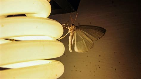 lights that don t attract bugs image gallery moths and light