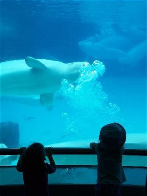 marineland niagara falls all you need to before you go tripadvisor