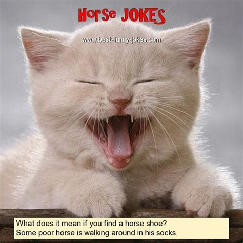 Horse Jokes: What does it mean if
