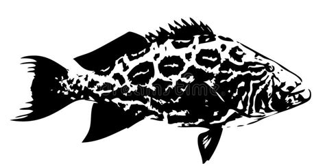 vector fish grouper broomtail saltwater vettore vissen vektor svart feeding predatory schildpad cernia pesce nero bianco fische illustrazione overzees zomerpatroon