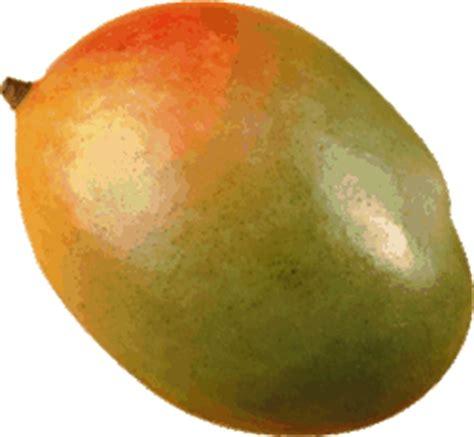 food  drinks mango  graphic mango gif