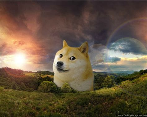 doge wallpapers imgur  quotes land