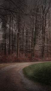 Forest, Road, Between, Green, Grass, And, Trees, 4k, 5k, Hd, Nature