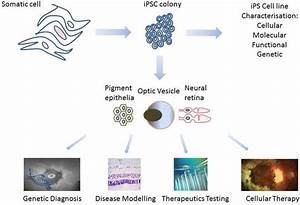 JCM | Free Full-Text | iPS Cells for Modelling and ...