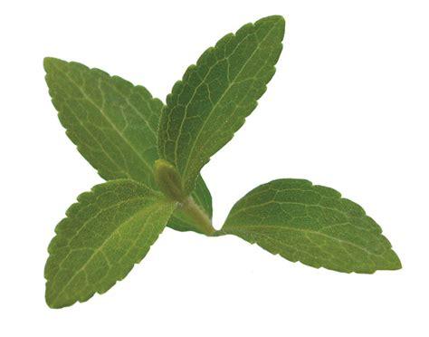 miracle herb    quit smoking