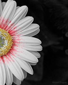 Splash of Color – Amazing Pictures Flowers by Michael ...