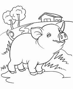 Desene Cu Animale Domestice De Colorat Imagini  U0219i Plan U0219e De