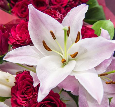 types of lilies flower press