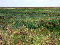 Синезеленые водоросли и причины их появления Страница 7 . Форум