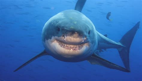 9 Things That Can Actually Help You Avoid Shark Encounters